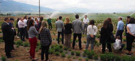"""""""Ανάπτυξη μέσω της Συνεργασίας"""" στον Αγροτικό Συνεταιρισμό Στέβια Ελλάς"""
