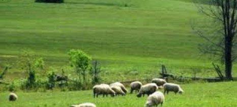 Ένταξη εκτάσεων στα βοσκοτόπια μέχρι τις 7 Οκτωβρίου και στην Περιφέρεια Ηπείρου