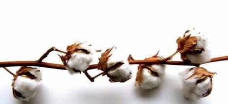 Συμβουλές για την επερχόμενη περίοδο σποράς βαμβακιού