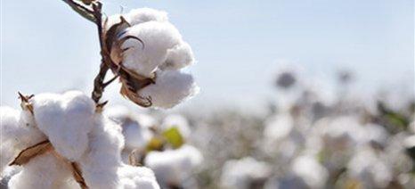 Τι πρέπει να κάνουν οι αγρότες για την αποτελεσματική φυτοπροστασία της βαμβακοκαλλιέργειας