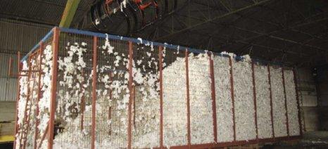 Θετικά τα μηνύματα για την παραγωγή βαμβακιού στη Ροδόπη