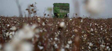Κινδυνεύουν να καταστραφούν βαμβακοκαλλιέργειες από πλημμύρες στην Κομοτηνή
