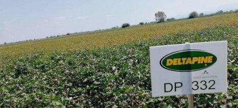 Τα ευεργετικά αποτελέσματα του προγράμματος πιστοποίησης Fiberpro σε πειραματικό αγρό με βαμβάκι