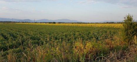 Βέτο στην απαγόρευση χρήσης παρασιτοκτόνων στις περιοχές οικολογικής εστίασης θα ασκήσουν οι ευρωβουλευτές
