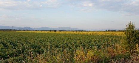 Συνεχίζονται τα προγράμματα γεωργικών προειδοποιήσεων για βαμβάκι και καλαμποκιού