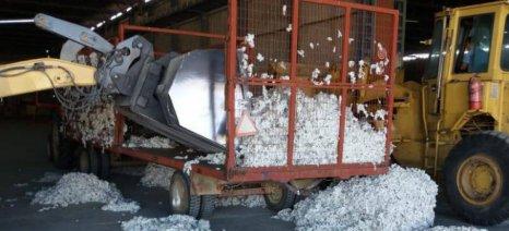 Πυρά Αραχωβίτη κατά Διεπαγγελματικής για τις ανοιχτές τιμές στο βαμβάκι