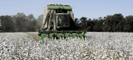 Οδηγίες φυτοπροστασίας για τους βαμβακοπαραγωγούς μετά την συγκομιδή