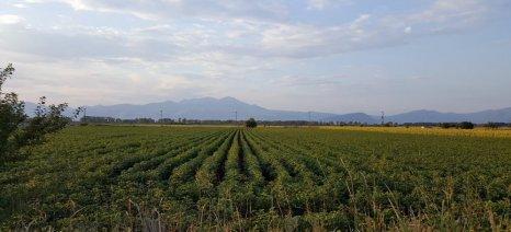 Ολοκληρωτική ζημιά από το χαλάζι στις καλλιέργειες των Φαρσάλων