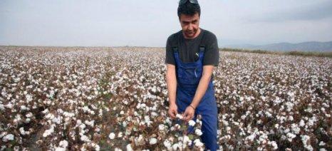 Άμεσα θα δοθούν οι ενισχύσεις στους βαμβακοπαραγωγούς