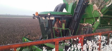 Καλύτερες οι προβλέψεις της ICAC για τις τιμές βαμβακιού την περίοδο 2015/16