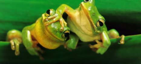 Έρευνα: Κινδυνεύουν να εξαφανιστούν τα βατράχια