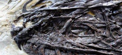 Ανακαλύφθηκε πρόγονος του Βελοσιράπτορα