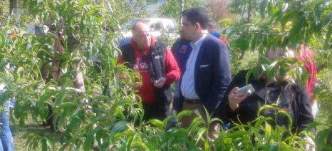 Δυσαρέσκεια των αγροτών στο Βελβεντό για τα πορίσματα των αποζημιώσεων από το περσινό χαλάζι