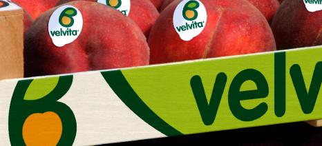 Εγκρίθηκε η ένταξη του ΑΣΕΠΟΠ Βελβεντού στο Μητρώο Εμπόρων Οπωροκηπευτικών