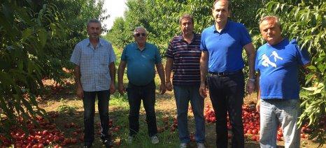 """Βεσυρόπουλος: """"Το ΥΠΑΑΤ και ο ΕΛΓΑ οφείλουν να να αποζημιώσουν τους πληγέντες παραγωγούς"""""""