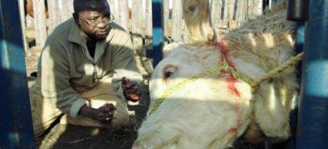 Αμερικανική χρηματοδότηση 87 εκατ. δολ. στον FAO για την καταπολέμηση των ζωονόσων