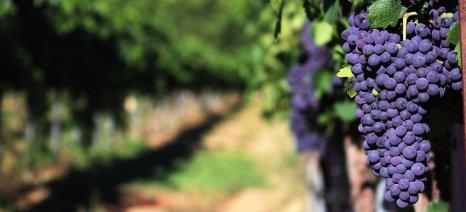 Η πτώση της παραγωγής κρασιού στη Γαλλία επιβεβαιώνεται για το 2019