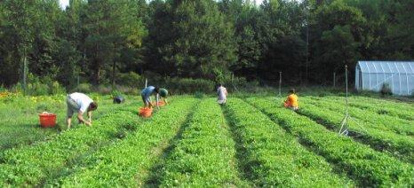 Παρέμβαση εισαγγελέα θα ζητήσει η Ένωση Βιοκαλλιεργητών Λακωνίας