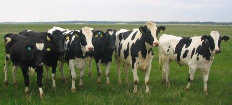 ΔΑΟΚ Ηλείας: Ολοκληρώθηκε η διαδικασία πληρωμών για Βιολογική Κτηνοτροφία πενταετίας 2012