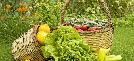 Ξεκίνησε η υποβολή αιτήσεων των υποψήφιων για το Μέτρο 11 «Βιολογικές Καλλιέργειες»
