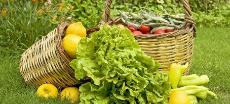 Ανοδικά τα βιολογικά προϊόντα στις προτιμήσεις των Ελλήνων καταναλωτών