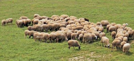 Πληρωμές για Βιο-Κτηνοτροφία στο Κιλκίς