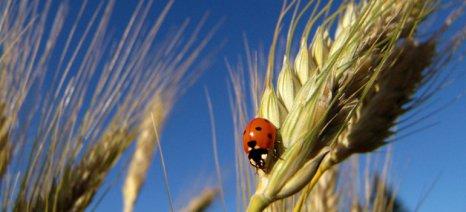 Από τις 23 Φλεβάρη οι δηλώσεις εφαρμογής βιολογικής γεωργίας για το 2015