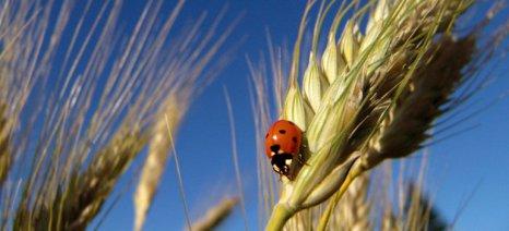 Tο θεσμικό πλαίσιο του Μέτρου 11 για τις βιολογικές καλλιέργειες - αναμένεται έγκριση από την ΕΕ για επέκταση