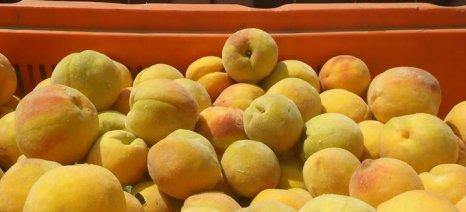 Ανανεώνονται από την 1η Ιουνίου τα μέτρα ενίσχυσης των παραγωγών για απόσυρση φρούτων και κηπευτικών