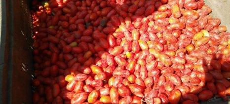 Σήμερα πιστώνεται η συνδεδεμένη ενίσχυση της βιοηχανικής ντομάτας