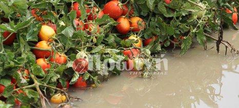 Η «Μέδουσα» έθαψε τη βιομηχανική ντομάτα της Ηλείας κάτω από το νερό