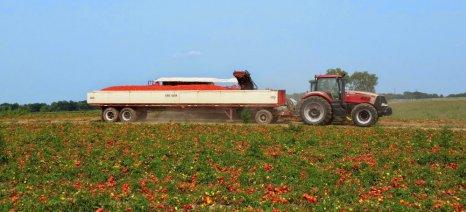 Ξεκινά η συγκομιδή βιομηχανικής ντομάτας στη Λάρισα