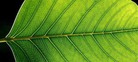 Βιονικό φύλλο μετατρέπει την ηλιακή ενέργεια σε υγρά καύσιμα