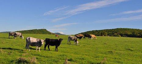 Οζώδης δερματίτιδα: Ανεπαρκείς οι αποζημιώσεις για τους βοοτρόφους της Ημαθίας