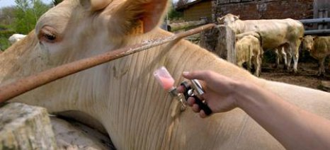 Συναγερμός στην Αιτωλοακαρνανία για την οζώδη δερματίτιδα - Υποχρεωτικός ο εμβολιασμός για προληπτικούς λόγους