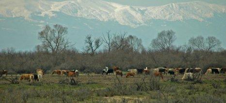 Με το νέο ορισμό για τους βοσκότοπους η Ελλάδα εξασφαλίζει επιπλέον 8 εκατ. στρ. επιλέξιμων για ενίσχυση εκτάσεων
