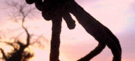 Κρεμασμένος εντοπίστηκε ο βοσκός που είχε εξαφανιστεί στη Γραβιά