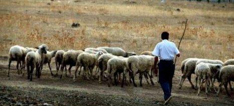 Στον εισαγγελέα οι κάτοικοι του Ζαρού Ηρακλείου για την προκλητική συμπεριφορά βοσκών