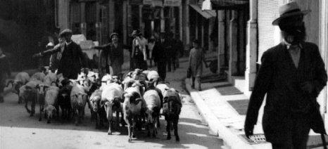 Η σκληρή κόντρα τσοπάνηδων και περιβολάρηδων στην Αθήνα του 1900