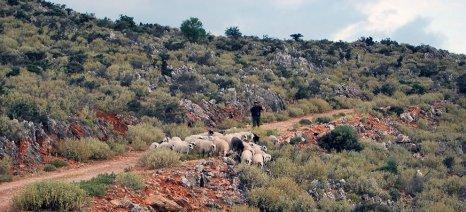 Παίρνουν βοσκότοπο πρώτα οι κτηνοτρόφοι που έχουν εκμετάλλευση στον ίδιο νομό