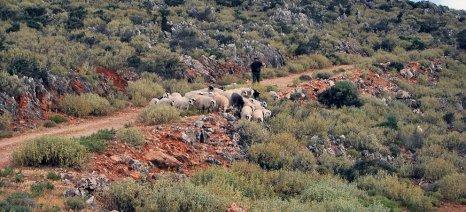 Ενισχύσεις de minimis σε κτηνοτρόφους της ορεινής Κρητης για την ιωδιοπενία στα νεογνά
