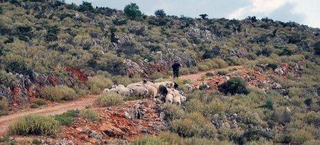 Και οι κτηνοτρόφοι των Χανίων ζητούν ελαστικότερα όρια για τη συνδεδεμένη ενίσχυση