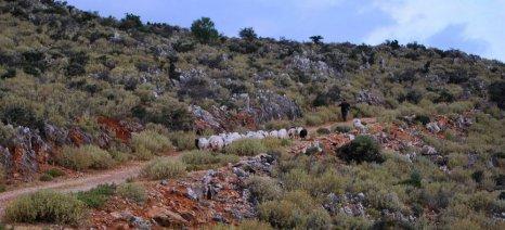 Στην Ορεστιάδα θα πραγματοποιηθεί συνέδριο για τους μεσογειακούς βοσκότοπους