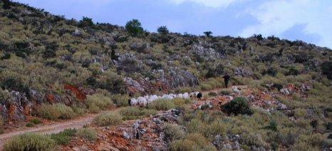 Μέχρι 31/12 η καταβολή μισθώματος επιλέξιμων βοσκοτόπων για το 2016 στην Κρήτη