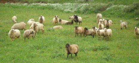 """Στον ανακριτή κατέθεσαν οι κτηνοτρόφοι της Αετομηλίτσας για τους """"κλεμμένους"""" βοσκότοπους"""