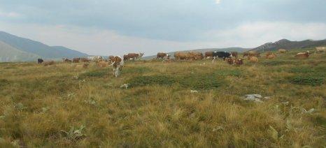 ΕΑΣΚΙ: Το κράτος δεν έχει τίτλους κυριότητας των δημόσιων βοσκότοπων και ζητά ενοίκιο από τους κτηνοτρόφους