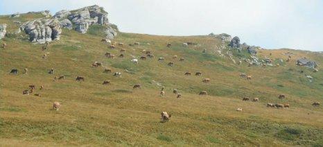 Τα επιχειρήματα των κτηνοτρόφων της Ανατ. Μακεδονίας Θράκης κατά της επαναχάραξης των μειονεκτικών περιοχών