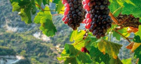 Αντώνης Αντίοχος: Τα αποθέματα πιέζουν την τιμή της σταφίδας