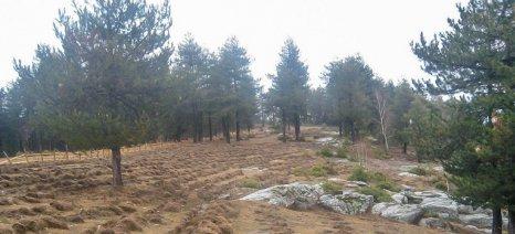 Μικρά ποσά ενισχύσεων σε πολλούς δικαιούχους «κόβουν» οι δασικοί χάρτες