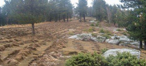 «Βόμβα» ΣτΕ για την εξαγορά καλλιεργούμενων εκχερσωμένων δασών